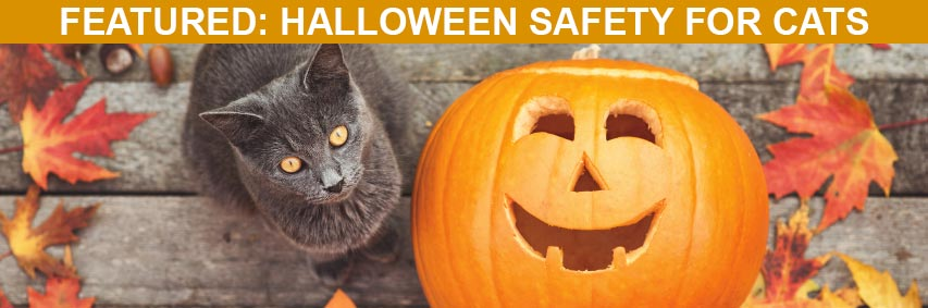 Featured Article: Halloween Safety for Cats