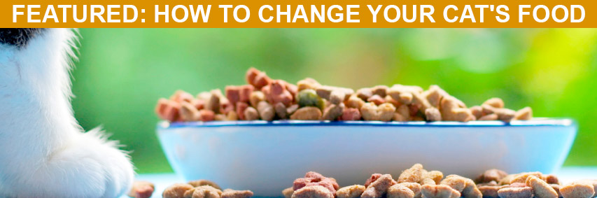Featured Article: How to Change Your Cat's Food