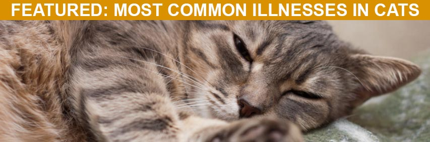 Featured Article: Most Common Illnesses in Cats