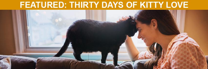 Featured Article: Thirty Days of Kitty Love