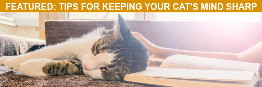 Featured Article: Tips for Keeping Your Cat's Mind Sharp