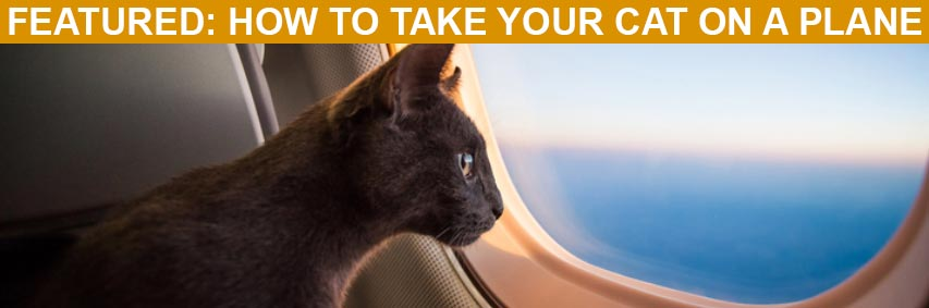 Featured Article: How to Take Your Cat on a Plane
