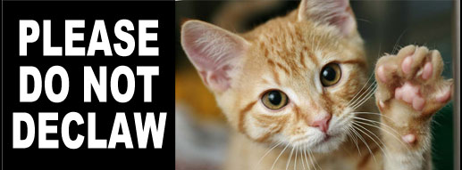 Please do not declaw your cat.  It's like chopping off the entire tips of your fingers.