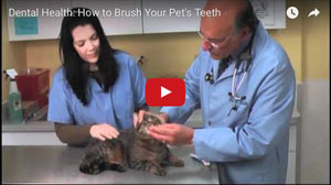This informative video teaches you how to brush your pet's teeth.