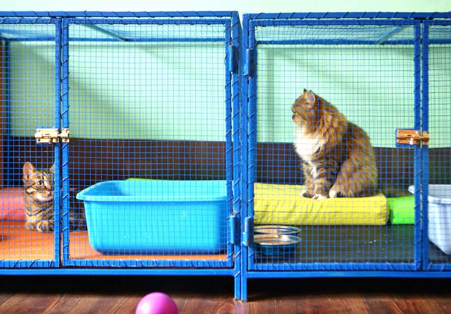 Tips for choosing a good cat kennel.