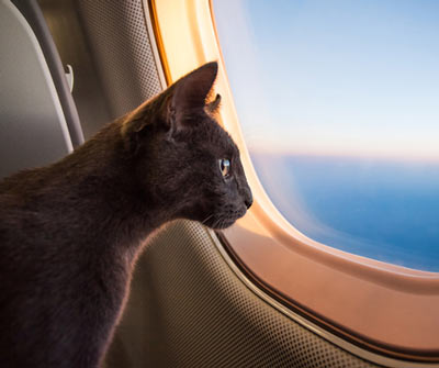 Tips for flying with your cat.