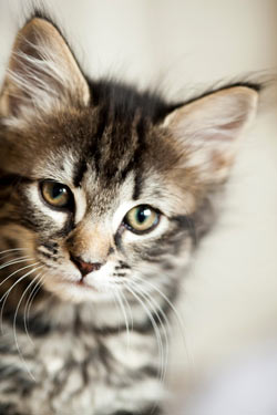 Many human medications are extremely toxic to cats.