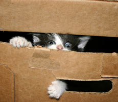 Cats in boxes aren't just cute, they're happy.