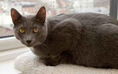 Learn what to do if a potential landlord requires your cat to be declawed.