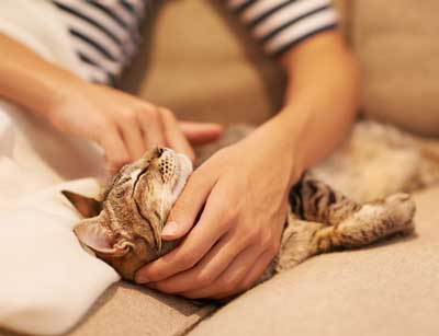 What should you do if you find a lump on your cat?