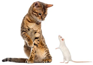 Mouse poison also poisons cats.