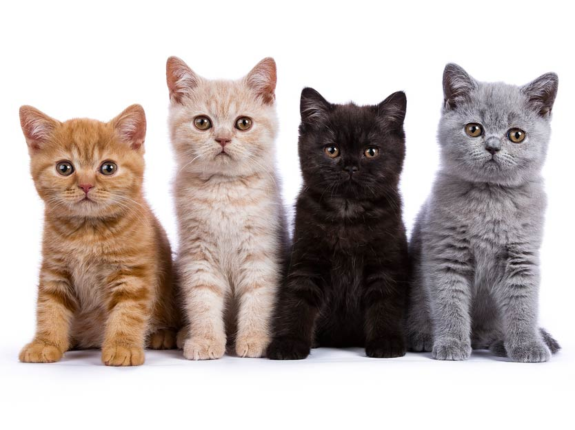 Learn what you need to know when you get a new kitten.