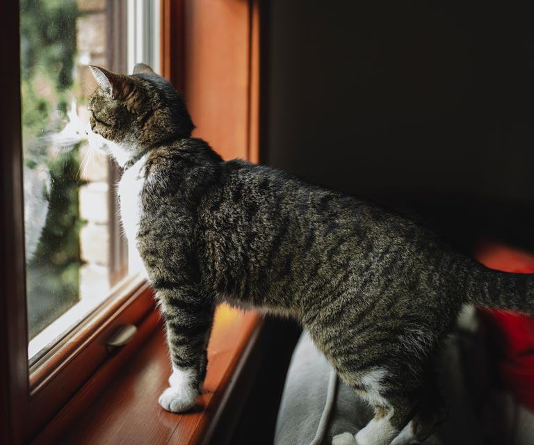 Learn how to keep outdoor cats from bothering indoor ones.