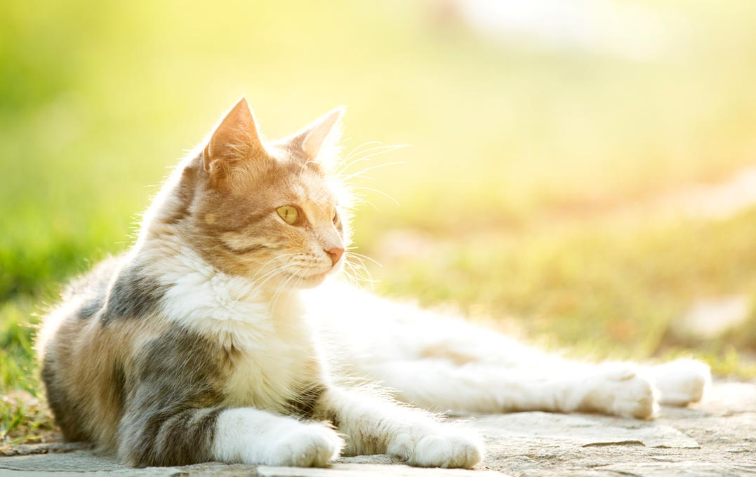 Outdoor dangers can decrease a cat's life expectancy.