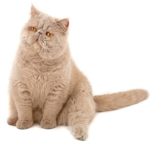Why Does My Cat's Rear End Smell Bad?