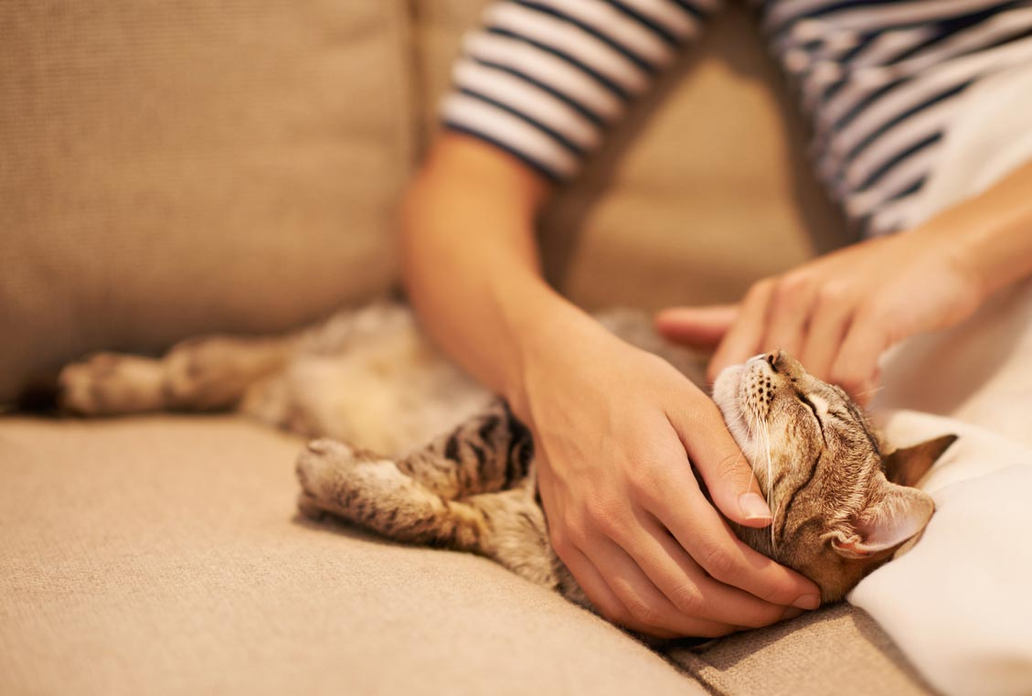 There's a right and wrong way to pet a cat.