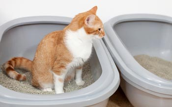 Putting two litter boxes next to each other can help with inappropriate elimination problems.