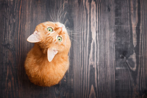 Are you making cat care mistakes?