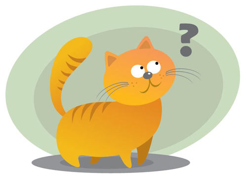 Take the quiz to test your knowledge of foods toxic to cats.