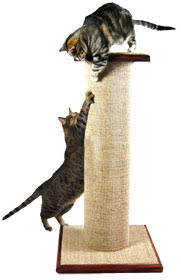 Sisal fabric is a favorite scratching material of cats.