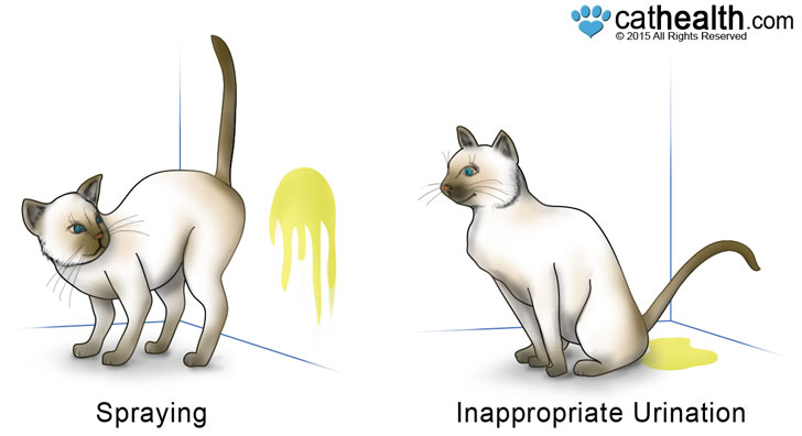 There is a difference between feeling spraying and urinating.