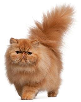 Cat Stinky Butt 52