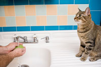 cat_bathroom
