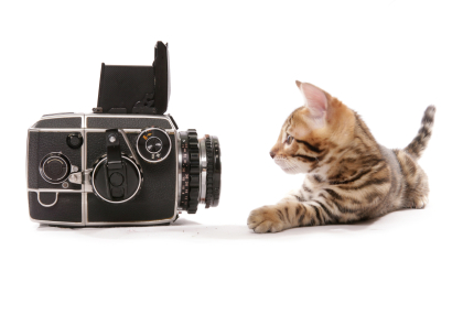 cat_photography