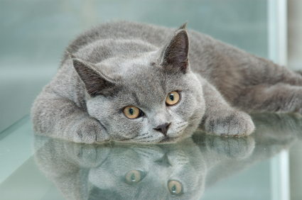 cat_reflection