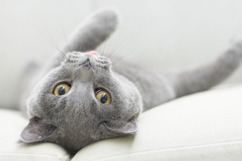 Abnormal Cat Behavior