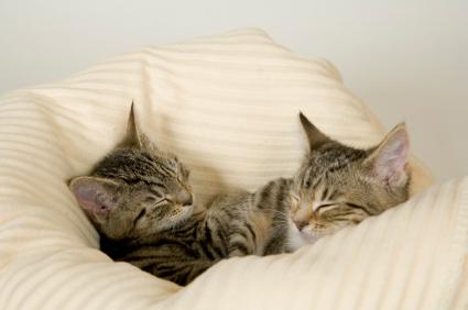 Cosy cats