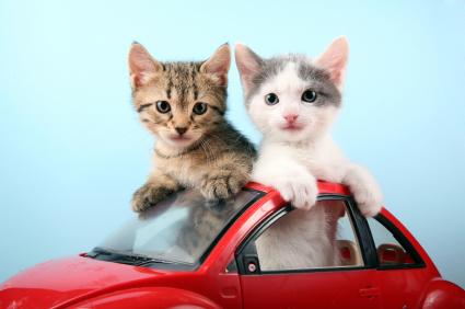 teacup kitten breeds