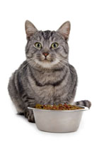 Wet Food Vs Dry Food For Cats