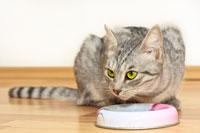 cat eating gif