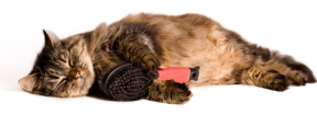 cat_sleeping_with_brush