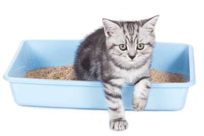 Deciphering strange litter box behaviors can be tricky.
