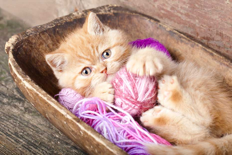The Dangers of Strings, Ribbons, and Yarn for Cats