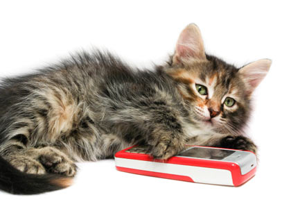 kitten urinary tract infection