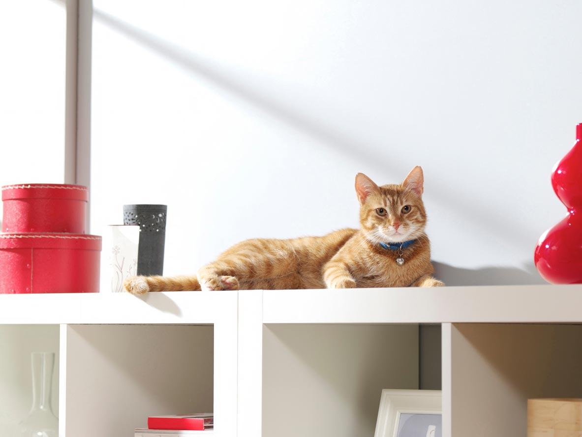 Cat Health Amp Cat Behavior Cathealth Com