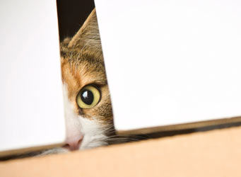 Cats in boxes; a cliché with scientific explanations.